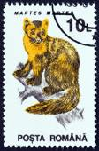 "ROMANIA - CIRCA 1993: A stamp printed in Romania from the ""Animals "" issue shows European pine marten (Martes martes), circa 1993. — Stock Photo"