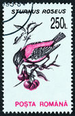 "ROMANIA - CIRCA 1993: A stamp printed in Romania from the ""Birds "" issue shows Rosy starling (Sturnus roseus), circa 1993. — Stock Photo"