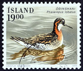 "ICELAND - CIRCA 1989: A stamp printed in Iceland from the ""Birds "" issue shows Red-necked phalarope (Phalaropus lobatus), circa 1989. — Stock Photo"