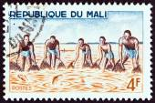 """MALI - CIRCA 1966: A stamp printed in Mali from the """"River Fishing """" issue shows collective shore fishing, circa 1966. — Stock Photo"""