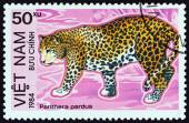"VIETNAM - CIRCA 1984: A stamp printed in Vietnam from the ""Protected Animals "" issue shows Leopard (Panthera pardus), circa 1984. — Stock Photo"