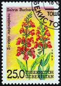 "UZBEKISTAN - CIRCA 1993: A stamp printed in Uzbekistan from the ""Flowers "" issue shows Salvia bucharica, circa 1993. — Stock Photo"