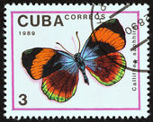 "CUBA - CIRCA 1989: A stamp printed in Cuba from the ""Butterflies "" issue shows Asterope sapphira (Callithea saphhira) butterfly, circa 1989. — Stock Photo"