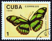 "CUBA - CIRCA 1989: A stamp printed in Cuba from the ""Butterflies "" issue shows Dido Longwing (Metamorpha dido) butterfly, circa 1989. — Stock Photo"