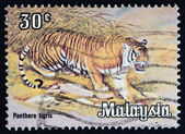 "MALAYSIA - CIRCA 1979: A stamp printed in Malaysia from the ""Animals "" issue shows a Tiger (Panthera tigris), circa 1979. — Stockfoto"