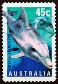 """AUSTRALIA - CIRCA 1998: A stamp printed in Australia from the """"Marine Life """" issue shows Bottlenose Dolphin (Tursiops truncatus), circa 1998. — Stock Photo"""