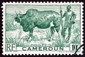 CAMEROON - CIRCA 1946: A stamp printed in France shows Zebu and Herdsman, circa 1946. — Stock Photo