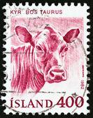 """Islanda - Circa 1982: Un timbro stampato in Islanda dagli spettacoli di problema """"Animali domestici"""" bovini (Bos taurus), circa 1982. — Foto Stock"""