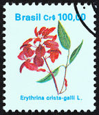 "BRAZIL - CIRCA 1990: A stamp printed in Brazil from the ""Flowers "" issue shows Erythrina crista-galli, circa 1990. — Stock Photo"