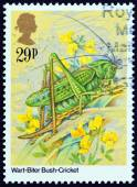 "UNITED KINGDOM - CIRCA 1985: A stamp printed in United Kingdom from the ""Insects "" issue shows Wart-biter bush-cricket (Decticus verrucivorus), circa 1985. — Stock Photo"