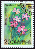 "UZBEKISTAN - CIRCA 1993: A stamp printed in Uzbekistan from the ""Flowers "" issue shows Dianthus uzbekistanicus, circa 1993. — Stock Photo"