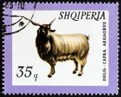 "ALBANIA - CIRCA 1966: A stamp printed in Albania from the ""Domestic Animals "" issue shows Wild Goat (Capra aegagrus), circa 1966. — Stock Photo"