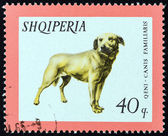 "ALBANIA - CIRCA 1966: A stamp printed in Albania from the ""Domestic Animals "" issue shows Dog (Canis familiaris), circa 1966. — Stock Photo"