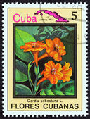"""CUBA - CIRCA 1983: A stamp printed in Cuba from the """"Cuban flowers"""" issue shows Cordia sebestana, circa 1983. — Stock Photo"""