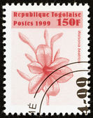 "TOGO - CIRCA 1999: A stamp printed in Togo from the ""Flowers "" issue shows Watsonia beatricis, circa 1999. — Stock Photo"
