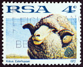 """SOUTH AFRICA - CIRCA 1972: A stamp printed in South Africa from the """"Sheep and Wool Industry"""" issue shows a sheep, circa 1972. — Stock Photo"""
