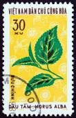 """NORTH VIETNAM - CIRCA 1974: A stamp printed in North Vietnam from the """"Textile Plants """" issue shows White mulberry (Morus alba), circa 1974. — Stock Photo"""