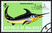 "MALDIVES - CIRCA 1973: A stamp printed in Maldives from the ""Fishes "" issue shows Marlin (Makaira herscheli), circa 1973. — Stock Photo"