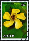 """ZAIRE - CIRCA 1984: A stamp printed in Zaire from the """"Flowers """" issue shows Hypericum revolutum, circa 1984. — Stock Photo"""