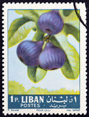 """LEBANON - CIRCA 1962: A stamp printed in Lebanon from the """"Fruits """" issue shows figs (Ficus carica), circa 1962. — Foto de Stock"""