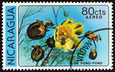 "NICARAGUA - CIRCA 1979: A stamp printed in Nicaragua from the ""Flowers "" issue shows Poro poro, circa 1979. — Stock Photo"