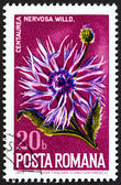 "ROMANIA - CIRCA 1974: A stamp printed in Romania from the ""Nature Conservation. Wild Flowers "" issue shows Centaurea nervosa, circa 1974. — Stock Photo"