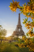 Eiffel Tower with spring tree in Paris, France — Стоковое фото