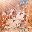 Bees inside the hive close up — Stock Photo #56330817