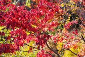 Colorful Autumn Leaves with Sunlight — Stock fotografie
