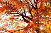 Colorful Autumn Leaves with Sunlight — Stock Photo