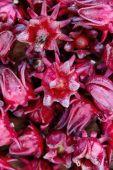 Group of fresh roselle flower — Stock Photo