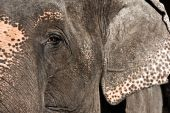 Elephant Close Up — Stock Photo