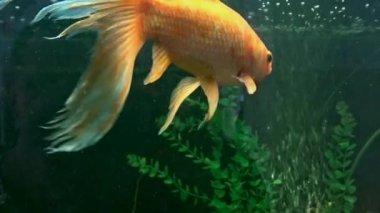 エキゾチックな魚 — ストックビデオ