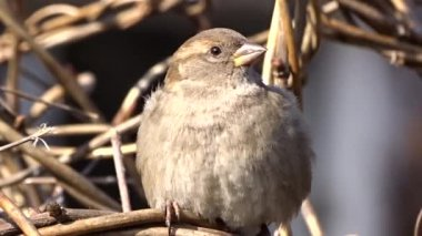 Sparrow on a tree — Stock Video