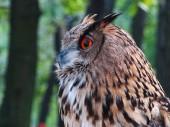 Owl in city park — Stock Photo
