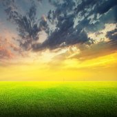 Field of green grass and sky — Stock Photo
