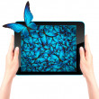 Butterfly flying out from tablet computer — Stock Photo #53995089