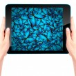 Butterfly flying out from tablet computer — Stock Photo #53995209