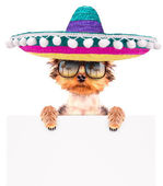 Dog wearing a mexican hat with banner — Stock Photo