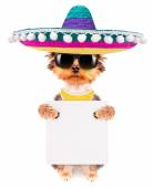 Dog wearing a mexican hat with banner — Foto Stock