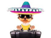 Dog wearing a mexican hat play on game pad — Stock Photo