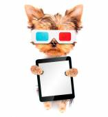 Dog going to the movies with tablet pc — Stock Photo