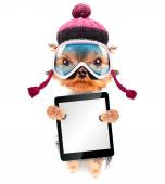 Dog  dressed as skier with tablet pc — Stock Photo