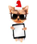 Christmas dog as santa with tablet pc — Stock Photo