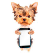 Cute dog with phone — Stock Photo