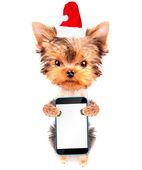 Christmas dog as santa with phone — Stock Photo