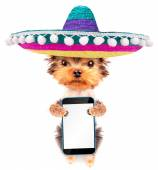 Dog wearing a mexican hat with phone — Stock Photo