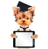 Graduated dog with tablet pc — Stock Photo