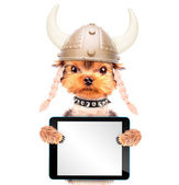 Dog dressed up as a viking with tablet pc — Stock Photo