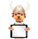 Dog dressed up as a viking with tablet pc — Fotografia Stock